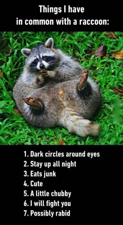 Things I have in common with a raccoon